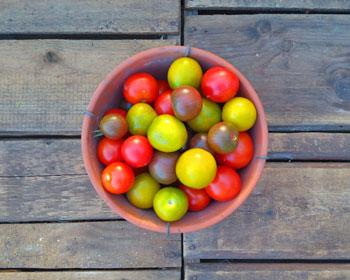 Tomatenmix aus Green Grape, Ruthje und Black Cherry
