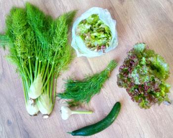 Fenchel, Salatmischung, Dill, Knoblauch, Gurke und Salatkopf