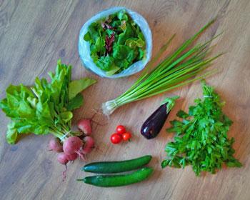 Salatmischung, Frühlingszwiebeln, Aubergine, Ringelbeete, Petersilie und Gurken