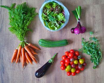 Möhren, Aubergine, Zucchini, Tomaten, Oregano, Salatmischung und Zwiebeln