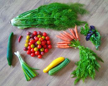 Fenchel, Gurke, Chili, Tomaten, Frühlingszwiebeln, Karotten und Basilikum