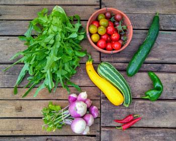 Eichblattsalat, Mairüben, Zucchini, Gurke, Paprika, Chili und Tomaten