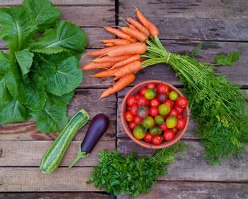 Romanasalat, Möhren, Tomaten, Zucchini, Aubergine und Petersilie