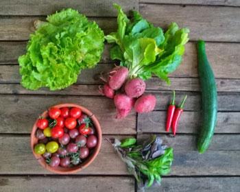 Salat, Ringelbeete, Chili, Gurke, Basilikum und Tomaten