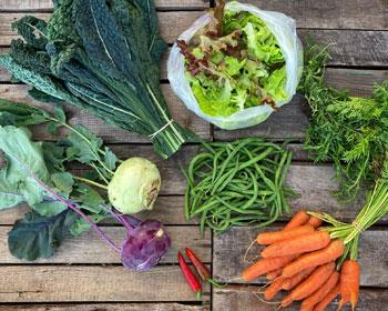 Kohlrabi, Palmkohl, Salatmischung, Bohnen, Chili, Bohnenkraut und Möhren