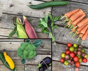 Mais, Basilikum, Gurke, Möhren, Tomaten, Zucchini, Brokkoli oder Auberginen