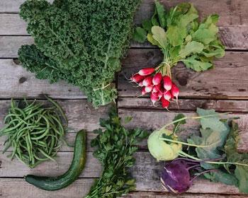 Bohnen, Grünkohl, Radieschen, Gurke, Petersilie und Kohlrabi