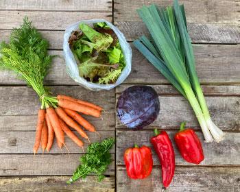 Möhren, Salatmischung, Rotkohl, Porree, Paprika und Petersilie