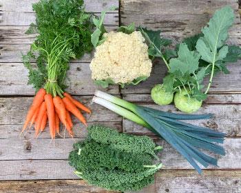 Möhren, Blumenkohl, Kohlrabi, Grünkohl und Porree