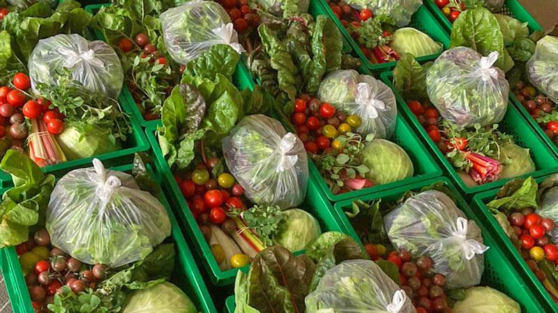 Gemüsekisten mit Sommergemüse