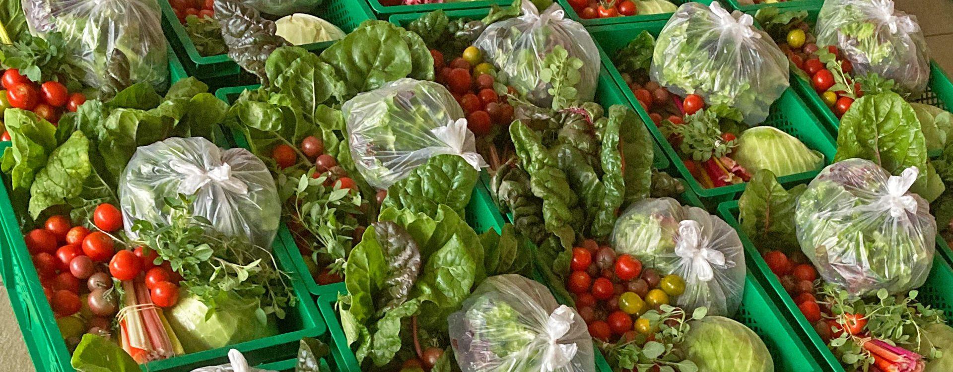 Kleine Gemüsekisten im Herbst