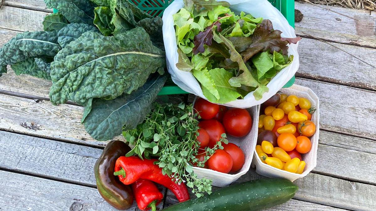 Gemüsekiste mit Salat, Kohl, Tomaten, Paprika und Gurke